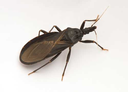 Chagas Disease Treatment in Hurst, TX